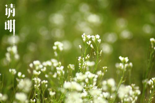 清明小长假踏青赏花、亲子游和自驾游提示:清明春光好 文明理性游