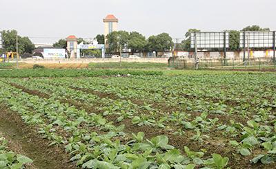 千龙湖水果蔬菜基地