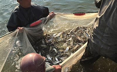 千龙湖鲌鱼养殖基地